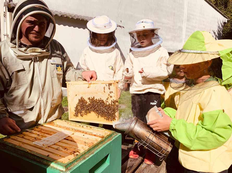 Kennst du die Bienen