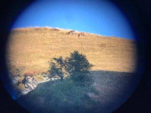 Tiere beobachten mit dem Ranger